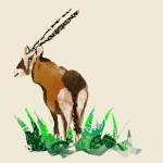 The Antelope
