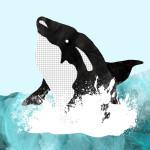 The Killer Whale